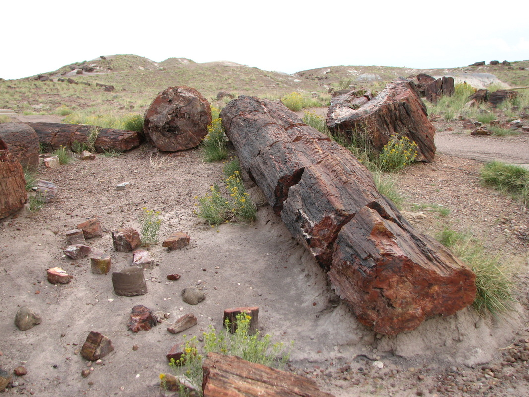 Pretty amazing to think that these logs are made of rock at the Petrified National Forest.