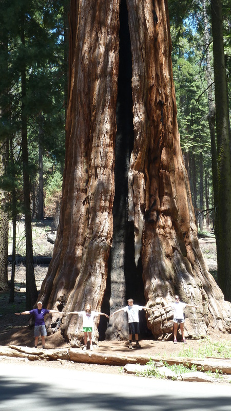 Trying to hug the big trees in Sequoia National Park.