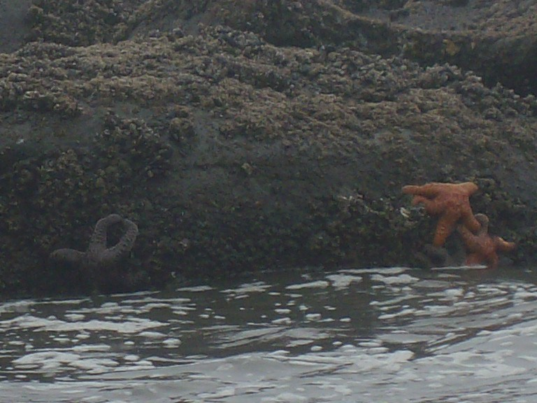 Cool sea life on Second Beach on the Olympic Peninsula.