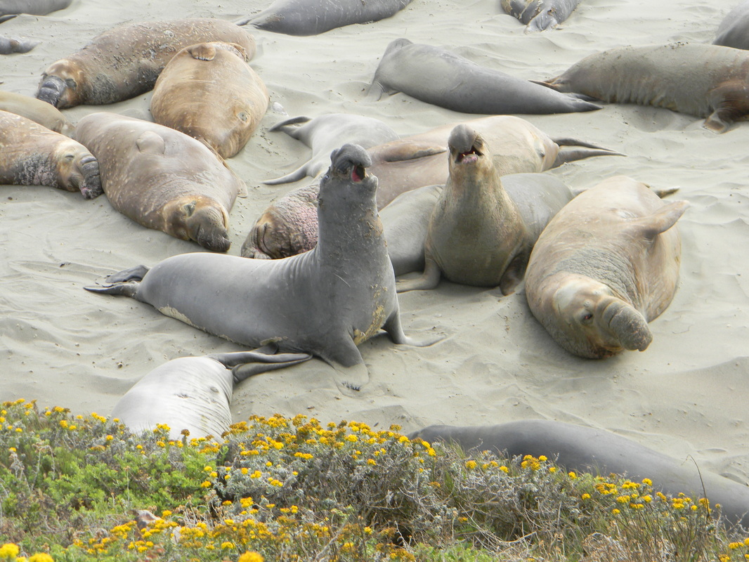 The elephant seals along the PCH are always entertaining.