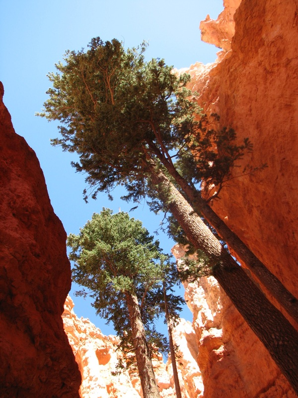 Looking up from the trail at Bryce Canyon.