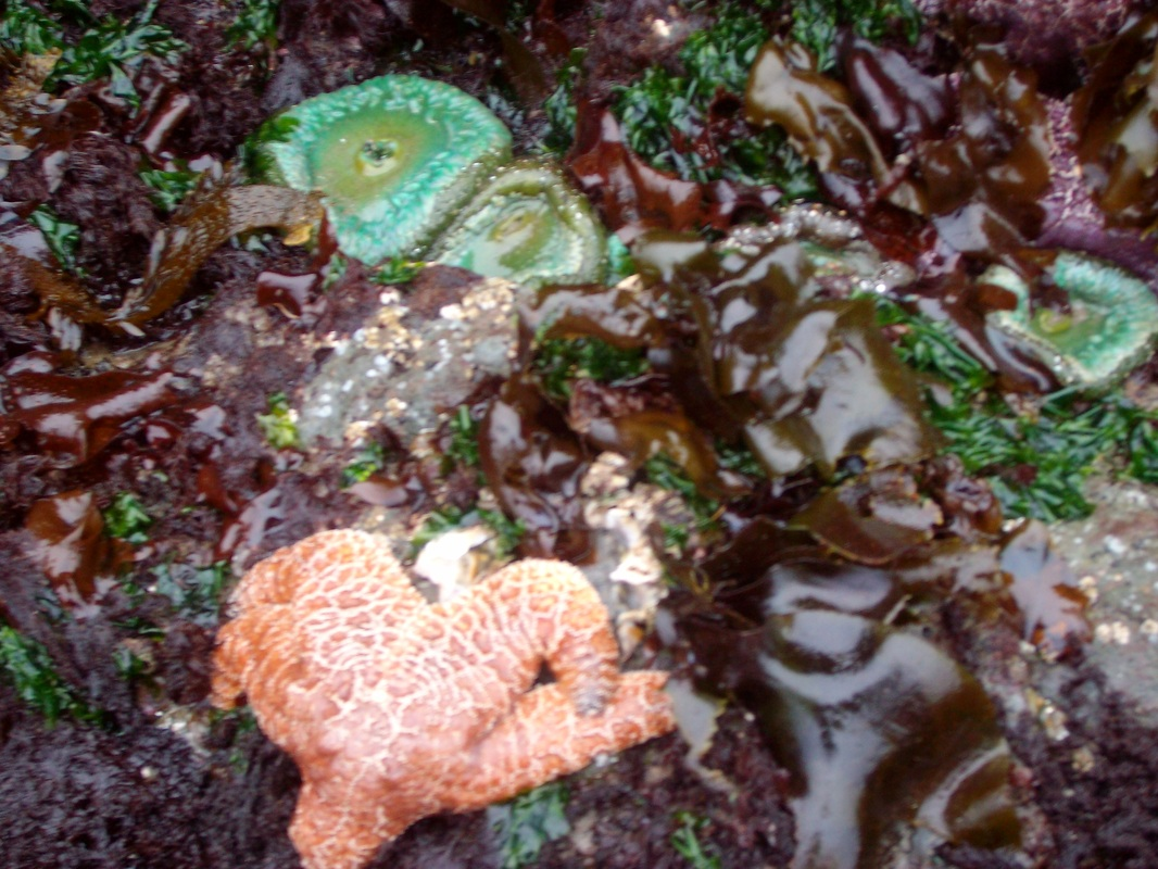 Up close with the sea life in Bandon, Oregon.