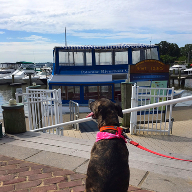 4 Dog Friendly Adventures in the DC Area. Take a Canine Cruise in Old Town Alexandria with your furry friend!