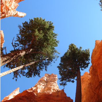 View from the trail at Bryce Canyon National Park. Learn more about visiting Bryce, Arches & Zion on the blog.