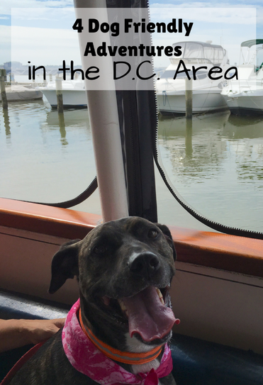 4 Dog Friendly Adventures in the DC Area, including a Canine Cruise and visiting local wineries and breweries.
