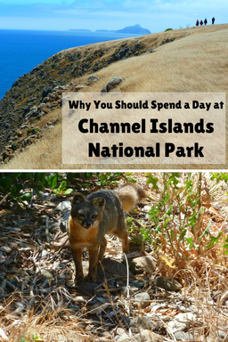 If you are visiting California, take a day trip to Channel Islands National Park.