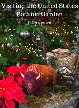 December is the perfect time to visit the United States Botanic Garden in DC.