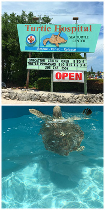 10 Things You Must Do in the Florida Keys with Teens - Spend an Afternoon Visiting the Turtle Hospital