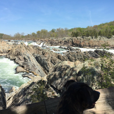 Visit Great Falls Park, one of 4 Dog Friendly Adventures in the DC area.